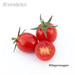 Tomatensorte Whippersnapper