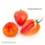 Tomatensorte Orange Russian 117