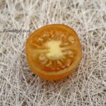 Tomatensorte Blondköpfchen Cherry
