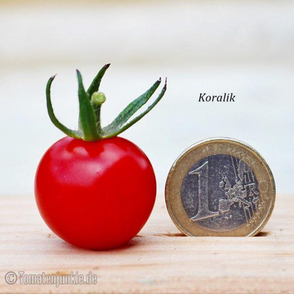 Tomatensorte Koralik