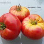 Tomatensorte Mariannas Peace