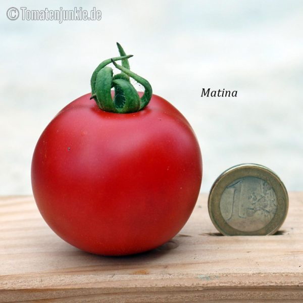 Tomatensorte Matina