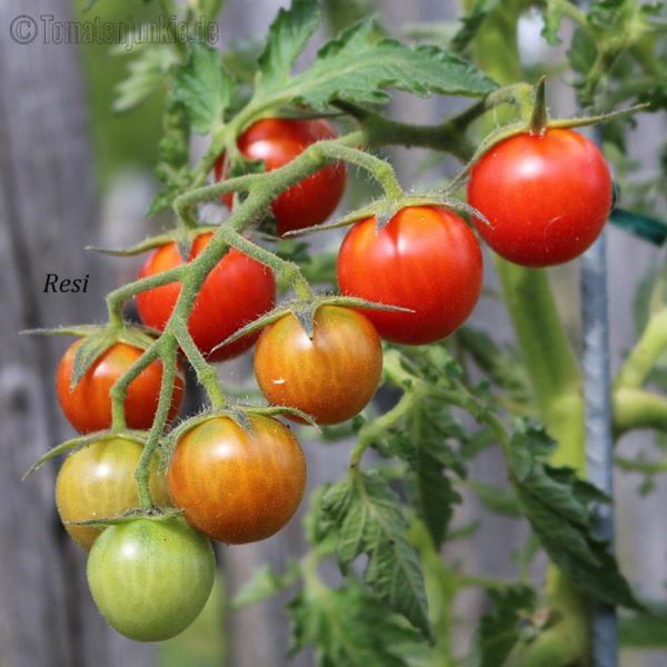 Tomatensorte Resi