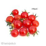 Tomatensorte Filippok