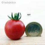 Tomatensorte Idyll