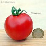 Tomatensorte Moneymaker