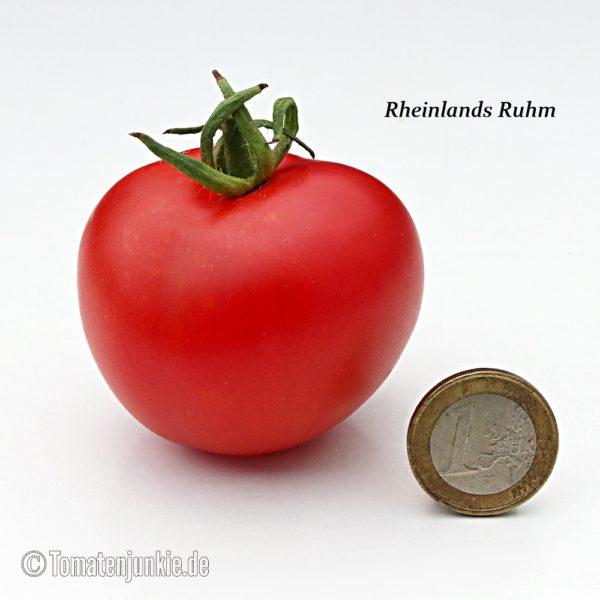 Tomatensorte Rheinlands Ruhm