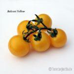 Tomatensorte Balconi Yellow