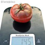 Tomatensorte Brandywine Black