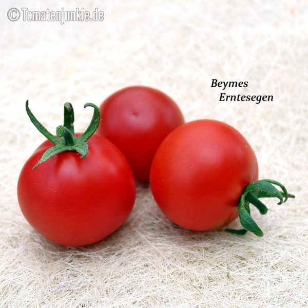 Tomatensorte Beymes Erntesegen