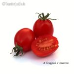 Tomatensorte A Grappoli d`Inverno