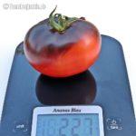 Tomatensorte Ananas Blau