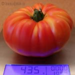 Tomatensorte Ananastomate