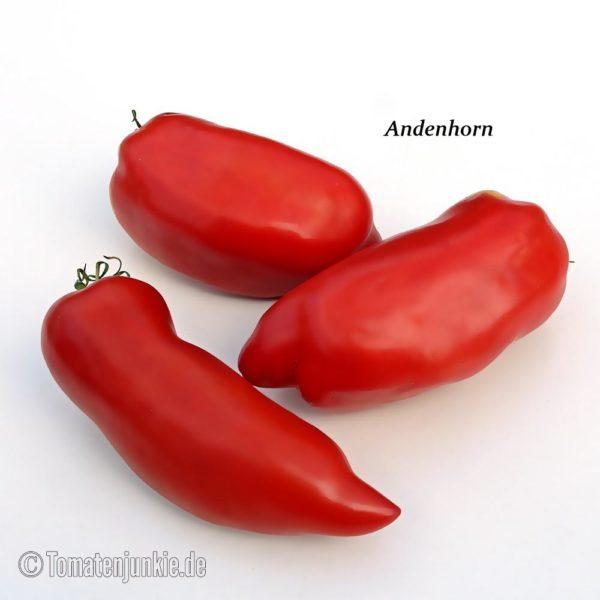 Tomatensorte Andenhorn