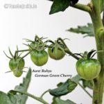 Tomatensorte Aunt Rubys German Green Cherry