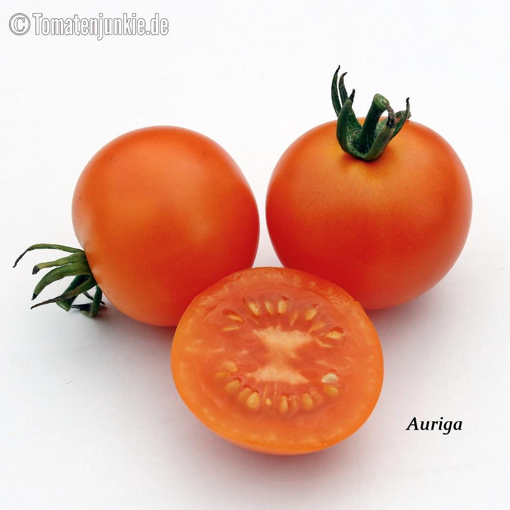 Tomatensorte Auriga