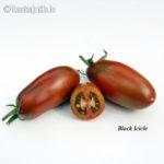 Tomatensorte Black Icicle
