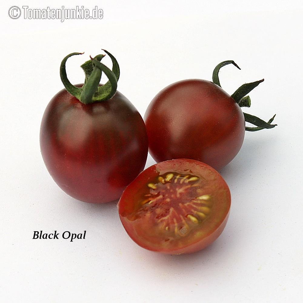 Tomatensorte Black Opal