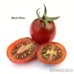 Tomatensorte Black Plum