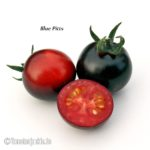 Tomatensorte Blue Pitts