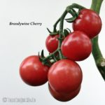 Tomatensorte Brandywine Cherry
