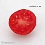 Tomatensorte Pillnitzer Stamm XV