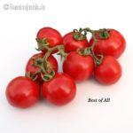Tomatensorte Best of All