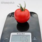 Tomatensorte Bonny Best