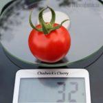 Tomatensorte Chadwick`s Cherry