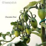 Tomatensorte Chocolate Pear