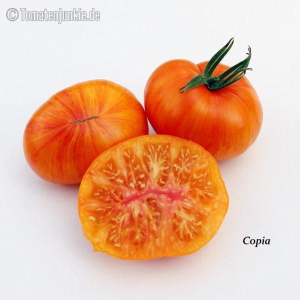 Tomatensorte Copia