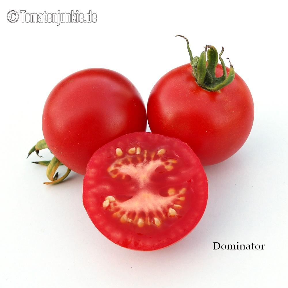 Tomatensorte Dominator