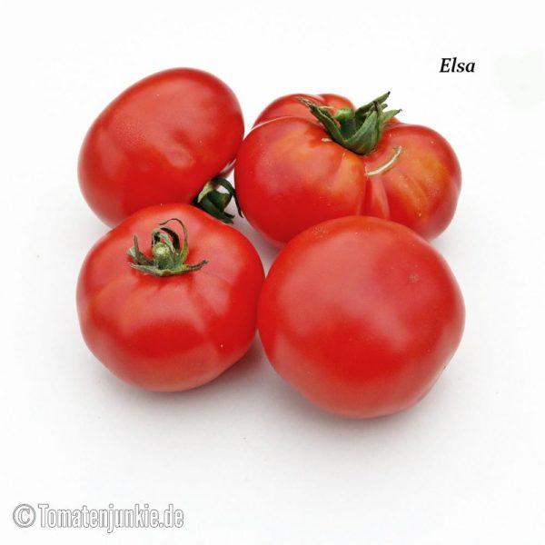 Tomatensorte Elsa