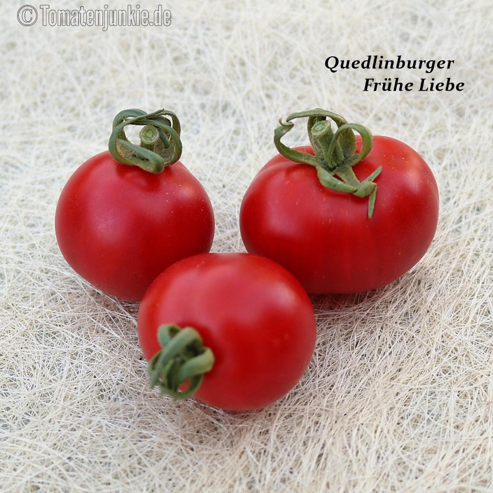 Tomatensorte Frühe Liebe