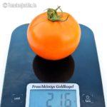 Tomatensorte Froschkönigs Goldkugel