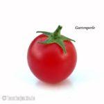 Tomatensorte Gartenperle