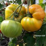 Tomatensorte German Gold