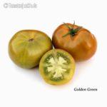 Tomatensorte Golden Green