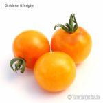 Tomatensorte Goldene Königin