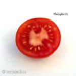 Tomatensorte Harzglut F1
