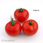 Tomatensorte Hellperle