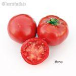 Tomatensorte Ikarus