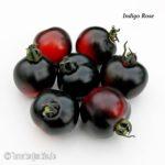 Tomatensorte Indigo Rose