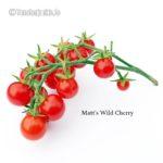 Tomatensorte Matt's Wild Cherry