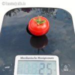 Tomatensorte Mexikanische Honigtomate