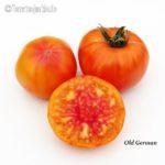 Tomatensorte OldGerman