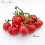 Tomatensorte Oxheart