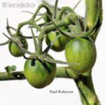 Paul Robeson Salattomate