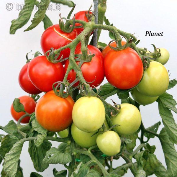 Tomatensorte Planet