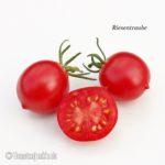Tomatensorte Riesentraube